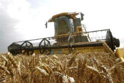 El trigo tiene financiación