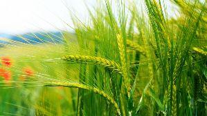 A cuidar la sustentabilidad a nivel ambiental, social y económico.