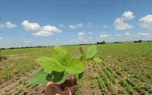 No se radicará una planta procesadora de semillas de maíz y girasol.