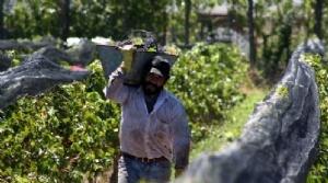 Los problemas del agro se agravaron por las devaluaciones en Brasil y Rusia.