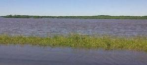 Los campos inundados son una gran amenaza para los seres humanos.