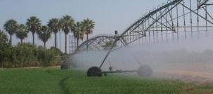 La agricultura es la actividad que demanda el mayor consumo de agua en el mundo.