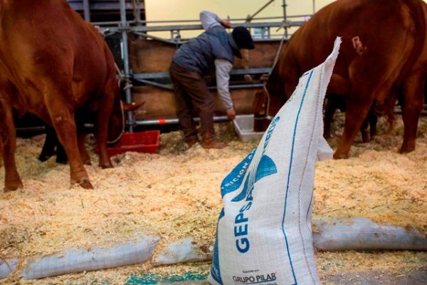 GEPSA FEEDS en Expo Rural