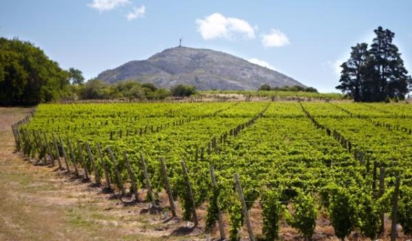 Primera Feria de Vinos de Uruguay