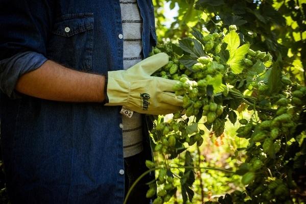 Fomenta la agroindustria y el empleo