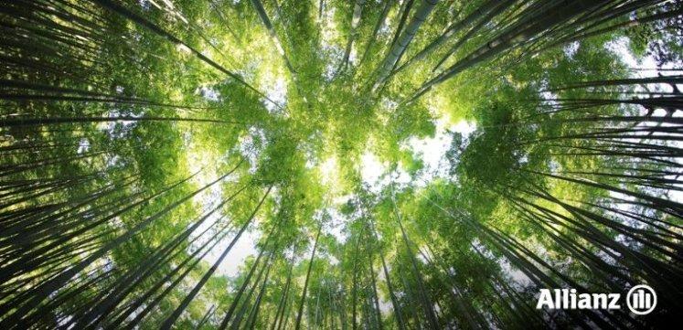 Grupo Allianz y el Medioambiente
