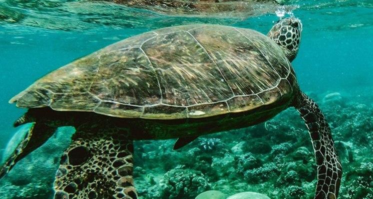 Para recuperar y conservar mares y océanos