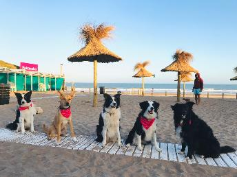Perritos en la playita